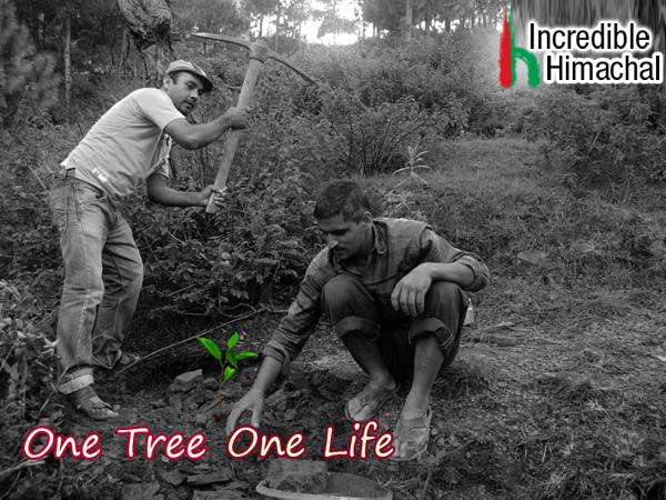 ih-tree