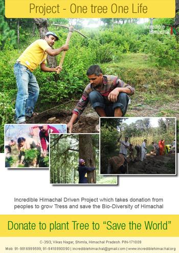 tree-plantation-himachal